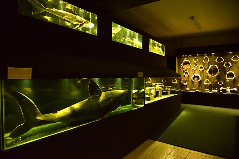 morar-na-praia-balneario-picarras-sc-museu-oceanografico-portal-imoveis